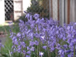 Local Washington Flowers